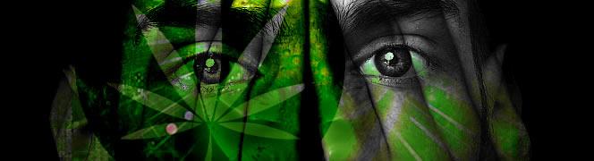 cannabis psychosegevoeligheid
