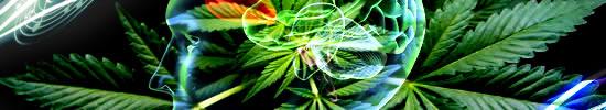 cannabis en psychose bij jongeren